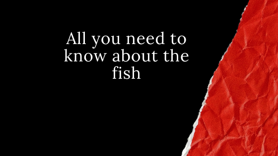 All you need to know about the fish