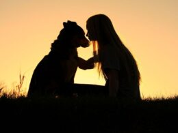 Ways To Help Pet Owner To Heal After the Death of A Pet