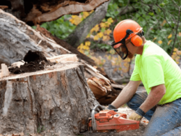 4 Good Reasons to Hire Tree Trimming or Tree Removal Services