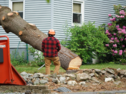 How to Get Rid of a Tree Safely
