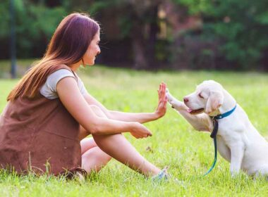 Signs Showing That You Need a Professional Trainer for Your Dog?