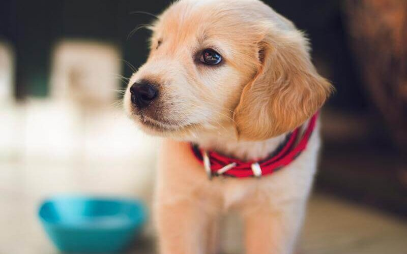 Common blunders dog owners make while training their furry companions and how to correct them