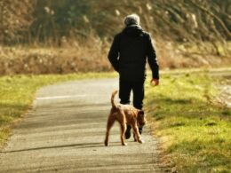 Freedom for dogs and peace of mind for pet owners are the takeaways of off-leash dog training