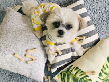 Top 7 Home Cleaning Hacks for Pet Owners